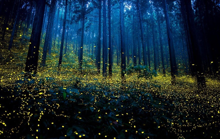 How To Count Fireflies